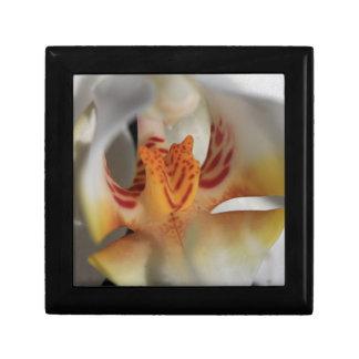 De Close-up van de orchidee Vierkant Opbergdoosje Small