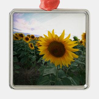 De Close-up van de zonnebloem Zilverkleurig Vierkant Ornament