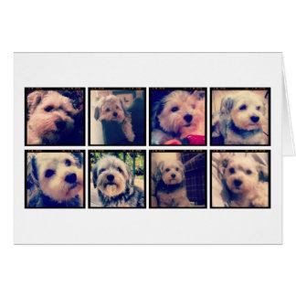 De Collage van de Foto van de douane met Vierkante Kaart