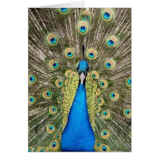 De Colorful Wild Vogel Peafowl van Pedro Peacock Kaart