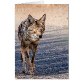 De Coyote van Wiley Kaart