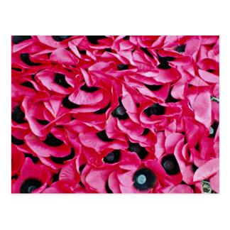 De dagbloemen van de papaver briefkaart