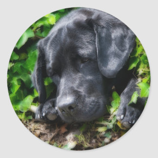 De dagen van de hond ronde sticker