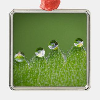 De Dalingen van het Water van de natuur verbinden Zilverkleurig Vierkant Ornament