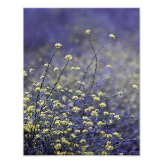 De Dans van Wildflower Foto Afdruk
