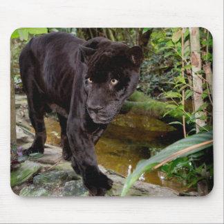 De Dierentuin van de Stad van Belize. Zwarte Muismatten
