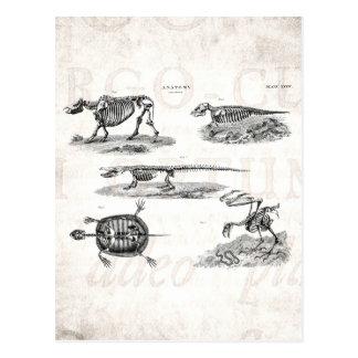 De Dierlijke Antiek Anatomie van Skeletten vintage Briefkaart