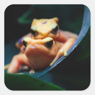 De Dierlijke Foto van het Wild van de Kikkers van Vierkant Sticker