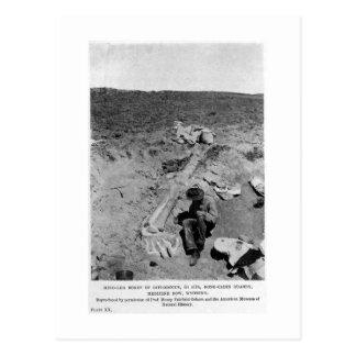 De dinosaurus van Diplodocus graaft Briefkaart