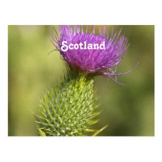 De Distel van Schotland Briefkaart