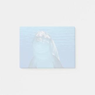 De Dolfijn van Bottlenose bekijkt de camera onder Post-it® Notes