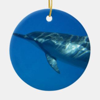De Dolfijn van de Spinner van Hawaï Rond Keramisch Ornament