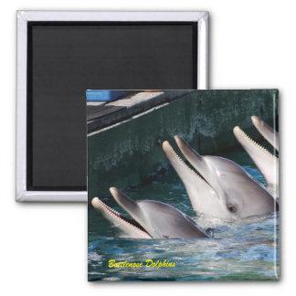 De Dolfijnen van Bottlenose Magneet
