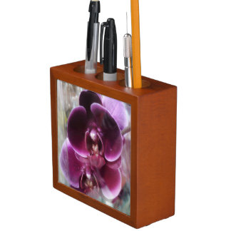 De donkere Paarse Orchideeën van de Mot Pennenhouder