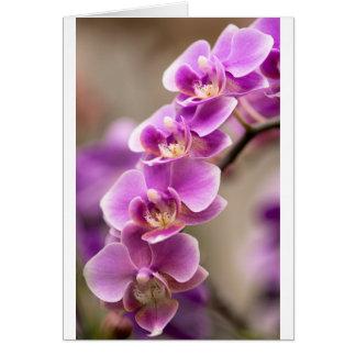 De donkerroze Ketting van de Bloem van de Orchidee Briefkaarten 0