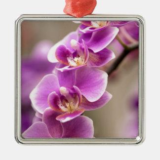 De donkerroze Ketting van de Bloem van de Orchidee Zilverkleurig Vierkant Ornament