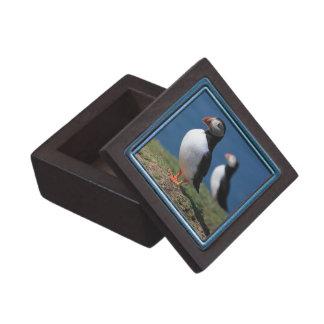 De Doos van de Gift van de Premie van de papegaaid Premium Decoratiedoosjes
