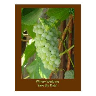 de druiven, het Huwelijk van de Wijnmakerij Briefkaart