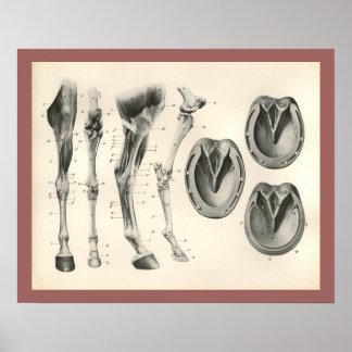 De Druk van de Anatomie van de Spier van het Bot Poster