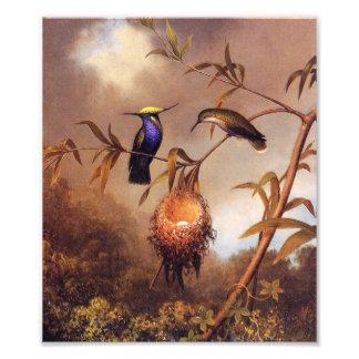 De Druk van de Familie van de kolibrie Foto Afdruk