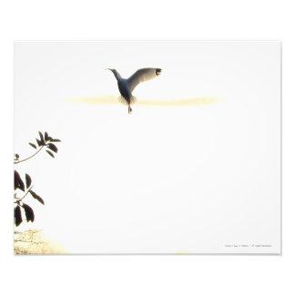 De Druk van de Foto van het Ballet van de ibis