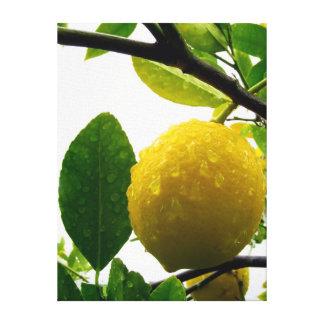 De druk van het canvas - citroen in de regen