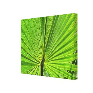 De Druk van het canvas - het Varenblad van de Palm