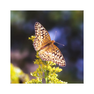De Druk van het Canvas van de vlinder