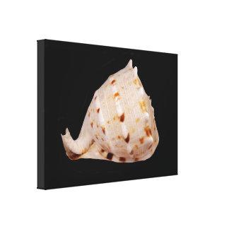 De Druk van het Canvas van Shell van de kroonslak