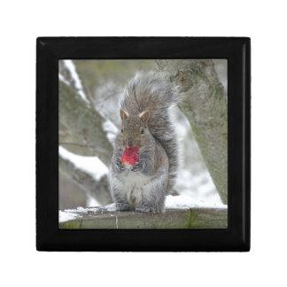 De eekhoorn van de aardbei decoratiedoosje