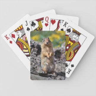 De Eekhoorn van de grond Waakzaam voor Gevaar Pokerkaarten