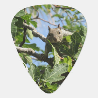 De Eekhoorn van de rots Gitaar Plectrum 0
