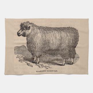 de eenjarige schapen Cotswold van de de 19de Theedoek