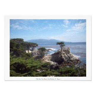 """De """"eenzame Boom treuzelt"""" Provincie Monterey Foto"""