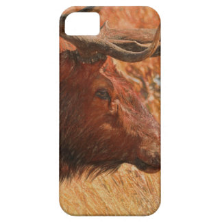 De Elanden van de stier Barely There iPhone 5 Hoesje