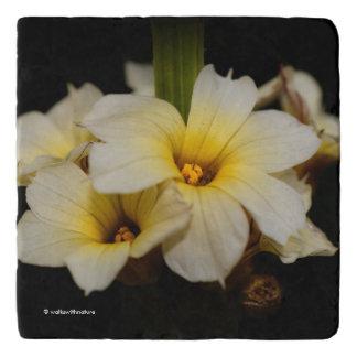 De elegante Bloemen van het Satijn Trivet