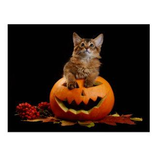 De enge Pompoen van Halloween en Somalisch Katje Briefkaart