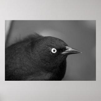 De enge vogel van Hitchcock Poster