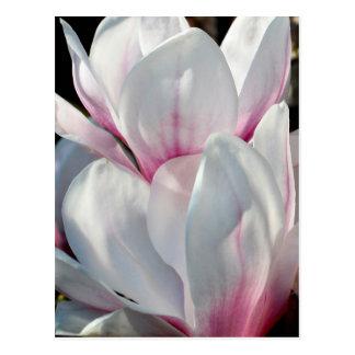 De enige Bloem van de Magnolia Briefkaart