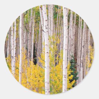 De Espen Colorado van de Herfst van bomen Ronde Sticker