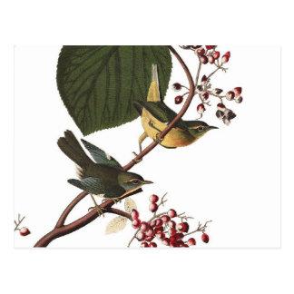 De Extra Grasmus van Audubon Briefkaart