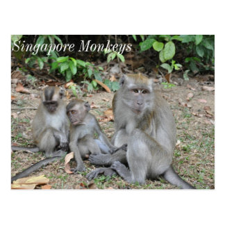 De Familie van de aap van Singapore Briefkaart
