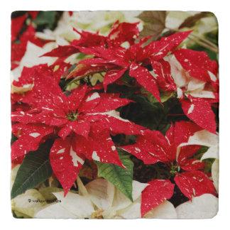 De feestelijke Rode en Witte Poinsettia van de Trivet