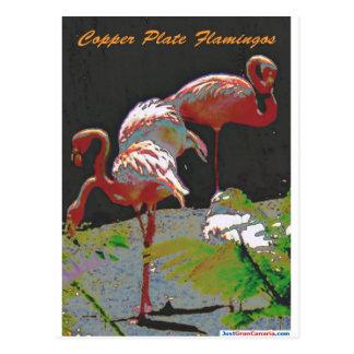De Flamingo's van het Bord van het koper Briefkaart