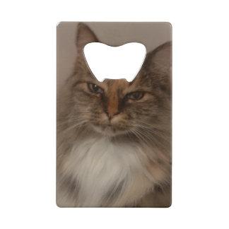 De Flesopener van de Kat van het calico Creditkaart Flessenopener