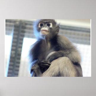 De Foto van de aap Poster