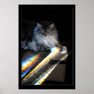 De Foto van de Brug van de Regenboog van de kat Poster