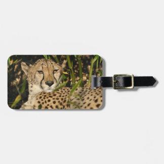 De foto van de jachtluipaard kofferlabel