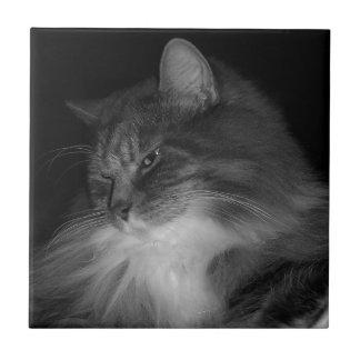De Foto van de Kat van BW van Simba Tegeltje
