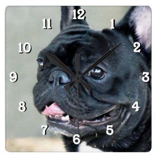 De Franse hond van de Buldog Vierkante Klok